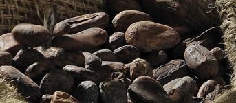 Parcours de la fève au chocolat